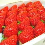 徳島県佐那河内村産 さくらももいちご 28粒入り  ももいちごの里で育った苺の新品種さくらももいちご  発送:12月中旬〜下旬の間