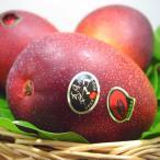 宮崎県産完熟マンゴー 太陽のタマゴ 1個入り 宮崎マンゴーの中で厳しい基準をクリアした完熟マンゴー 母の日 ギフト 出荷予定:4月中旬〜