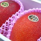 宮崎県産完熟マンゴー 太陽のタマゴ 大玉2個入り 宮崎マンゴーの中で厳しい基準をクリアした完熟マンゴー 母の日 ギフト 出荷予定:4月中旬〜