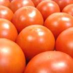 高知県産 徳谷トマト 500g  極限の状態で栽培されたフルーツトマト  母の日 ギフト 発送:2月中旬〜