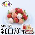 福岡・佐賀産 紅白いちご (あまおう&白いちご)4パック