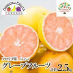 ショッピングフルーツ 送料無料 フロリダ産グレープフルーツルビー20玉