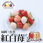 福岡・佐賀産 紅白いちご (あまおう&白いちご)2パック