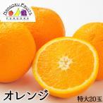 アメリカ産バレンシアオレンジ特大20玉送料無料¥4,480