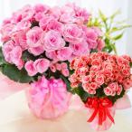 遅れてゴメンね!敬老の日 花 ギフト サイズアップで豪華な選べる季節の鉢花ギフト
