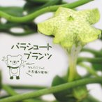 おもしろ多肉植物!パラシュートプランツ3号ポット苗
