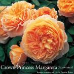 イングリッシュローズ大苗クラウンプリンセスマルガリータ アプリコットオレンジ ●バラ7号角鉢植え