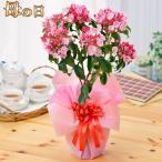 母の日プレゼント 選べる季節の鉢花B 吉本花城園 フラワーギフト2017
