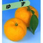 果樹苗【柑橘類苗木】A21本ゆず-木頭