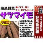 ●サツマイモ苗【イモヅル苗】20本束