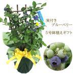 2020 父の日 ギフト プレゼント 植物 花  実付きブルーベリー鉢植え