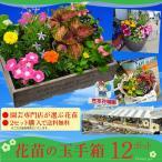 花苗!玉手箱!2セット注文で送料無料★園芸専門店が選ぶ季節のお花の苗!