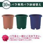 バラ専用植え替えサービス リッチェル社製バラ鉢に専用培養土で植え替えてお届け 10号サイズ