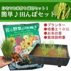 かんたん田んぼセット!/お米作り栽培セット/半タルプランター1、稲苗1、培養土1(10リットル)
