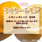 特選果樹苗★マイヤーレモン