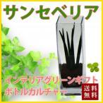 サンスベリア ハイドロカルチャー ボトルカルチャー 観葉植物 鉢植えの花 鉢植え プレゼント誕生日 結婚記念日 結婚祝い 画像 送料無料