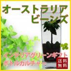 オーストラリアビーンズ  ハイドロカルチャー ボトルカルチャー 観葉植物 鉢植えの花 鉢植え プレゼント誕生日 結婚記念日 結婚祝い 画像 送料無料