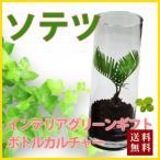 ソテツ ハイドロカルチャー ボトルカルチャー 観葉植物 鉢植えの花 鉢植え プレゼント誕生日 結婚記念日 結婚祝い 画像 送料無料
