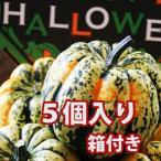 ハロウィン かぼちゃ 恐竜の卵 カーニバル 5個入り 箱付き カボチャ 生かぼちゃ 飾り ハロウィンカボチャ インテリア オブジェ 置物 玄関