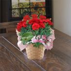母の日 父の日 カーネーション 鉢植えの花 鉢植え ギフト生花 フラワーアレンジ プレゼント誕生日 結婚記念日 結婚祝い
