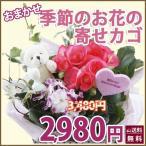 母の日 カーネーション Aセット 寄せ植え 寄せ鉢 カーネーション Aセット ギフト プレゼント 鉢植えの花 鉢植え 母の日 父の日