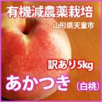桃 白桃  送料無料 訳あり 山形の桃 あかつき 白桃 5kg 11個〜13個 満杯詰 8月10日頃〜8月15日頃