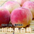白桃 送料無料 桃 もも 山形  訳あり 川中島白桃 大玉2kg 満杯詰め 果物 かたい桃 固い桃 硬い桃
