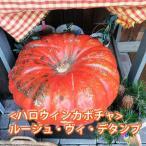 ハロウィン かぼちゃ ルージュ ヴィ デタンプ 1個 カボチャ 生かぼちゃ 飾り 巨大 ハロウィンカボチャ 特大 インテリア オブジェ 置物 玄関
