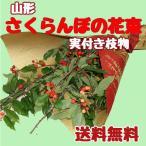 山形産さくらんぼの花束(実付き枝物)