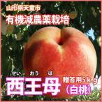 桃 もも 山形の桃 西王母 せいおうぼ 白桃 秀5kg11個〜13個 満杯詰 9月下旬〜10月上旬 送料無料 送料無料 送料無料