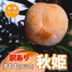 スモモ すもも 秋姫  ご家庭用 訳あり 1.5kg 7個〜10個入り 満杯詰