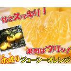 ワケアリ木成り河内晩柑(ジューシーオレンジ)約3kg