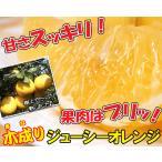ワケアリ木成り河内晩柑(ジューシーオレンジ)約5kg