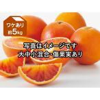 ワケありブラッドオレンジ約5kg