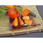 富有柿(一般品質・優品)約5.5~6Kg 22~35個入 【11月下旬頃発送】
