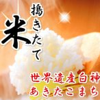 【29年産】【米 5kg 送料無料】秋田県産 あきたこまち 玄米 5kg 【米】【白米 4.5kg】【一等米】【5 kg】【お米】【御贈答】