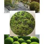 観葉コケ 三種混合 砂苔とハイ苔とウマ杉苔の3種類 45cm×30cm 水苔・和庭・オブジェ・ガーデニング 東名阪は送料込