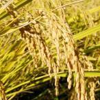 超古代ソマチット米 (コシヒカリ玄米 5kg)