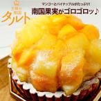 ケーキ タルト 王様のマンゴー&パインタルト フルーツタルト キングマンゴーとパイナップルのタルト