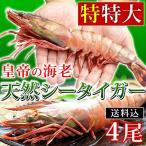 特特大 冷凍 シータイガー ジャンボエビ 皇帝の海老 エビ 海老 有頭えび 4尾セット 1尾180-229g 約28-30cm 個包装
