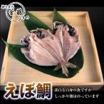 熱海釜鶴/えぼ鯛干物 (1枚)