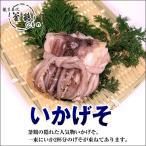 いかげそ(1束)国産 無添加 熱海 釜鶴 ひもの