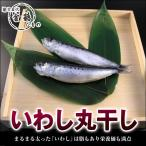 いわし丸干し(1本)国産 無添加 熱海 釜鶴 ひもの