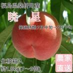 桃 福島県桑折町産 暁星 ギフト品 約1.8kg(7〜9個) 7月中旬〜7月下旬の画像