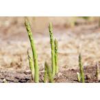 蘆筍 - 送料無料のチャンス 早割価格 北海道産露地栽培グリーンアスパラLLサイズ約800g