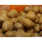 奇异果 - キウィ3kg(送料無料)北海道.沖縄は800円、東北6県は250円必要](食べ頃キウイ)(わけあり)国産(和歌山産キウイフルーツ3kg)(サイズ混)(30〜40個)