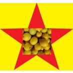 (加工用)(わけありB作)(返品不可商品)(激安国産レモン)(数量限定)(わけあり/訳あり/ワケあり)和歌山産 レモン10kg