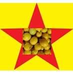 レモン3kg(送料無料)(わけあり)国産レモン(ノーワックス)(低農薬)(省農薬)(和歌山産 3kg)