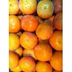 富有柿8kg(送料無料)【わけあり / 訳あり / ワケあり】【和歌山産】富有柿(ふゆ柿)8kg