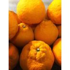 柑橘类 - デコポン4kg(送料無料[北海道・沖縄は800円、東北6県は250円必要]【シーズン最終】【わけあり】和歌山産デコポン(しらぬい) 4kg